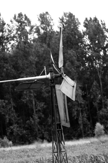Windmill Check This Out Taking Photos Outside Holland Summer Tuinen Van Appeltern Summertime The Netherlands Garden Photography Nature_collection Gardens Nature Garden Naturelovers Nature Photography Blackandwhite Photography Appeltern Black & White Grass