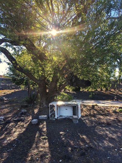 Viaje a Calafate Calafate Sunlight Nature Outdoors Day Popckorn No People Rural Scene