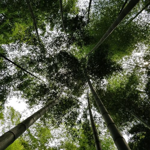 Bamboo Grass China Forest Mountain Moganshan Summer High Angle View No People Bamboo Grove Grass Beauty In Nature