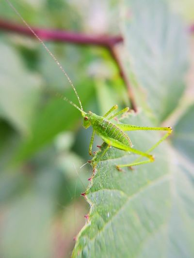 Nearly hidden Leaf Insect Spider Web Full Length Spider Animal Leg Close-up Animal Themes Green Color