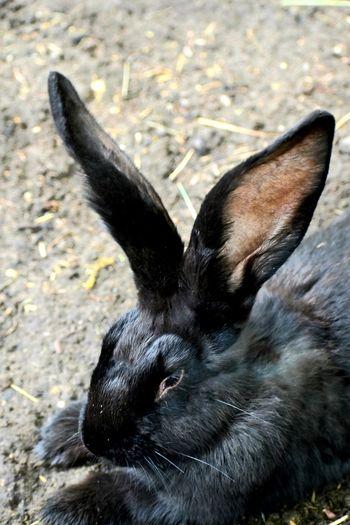 Close-up of a black cat