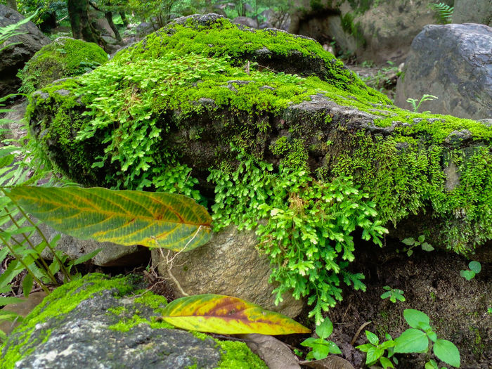 Close-up of moss growing on rocks