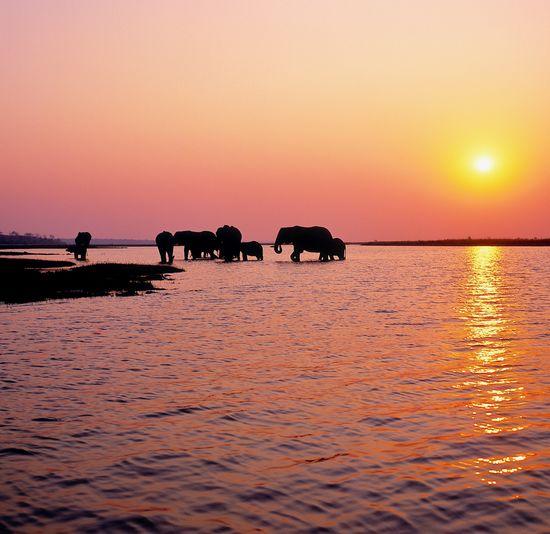 Silhouette elephants in lake against orange sky