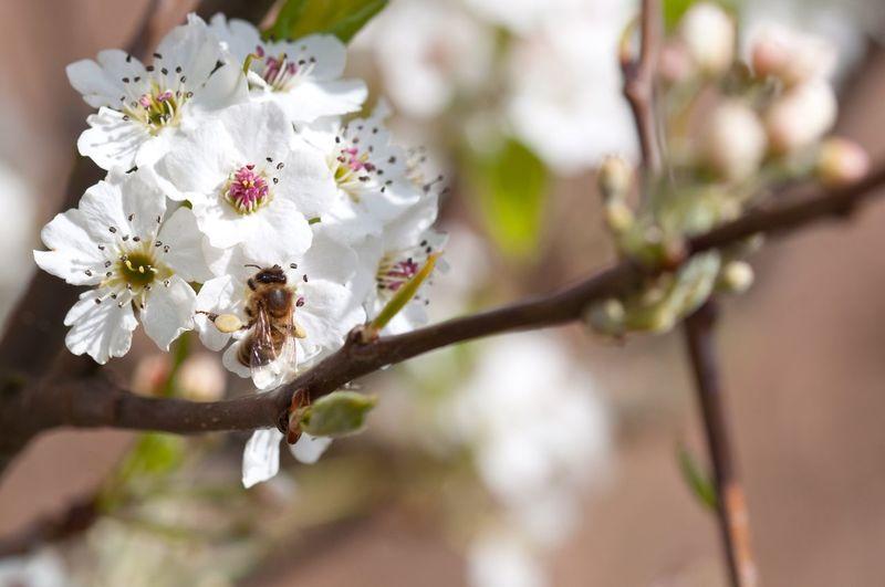 Pollen Simple