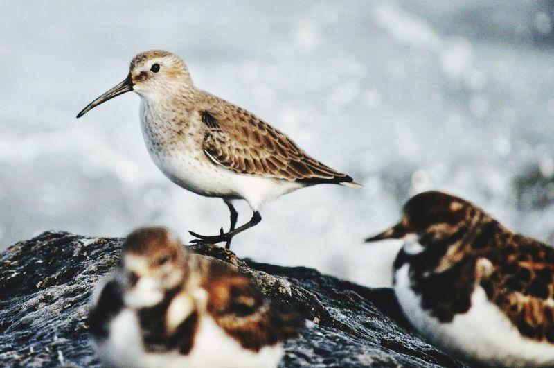 Bird perching on rock in snow