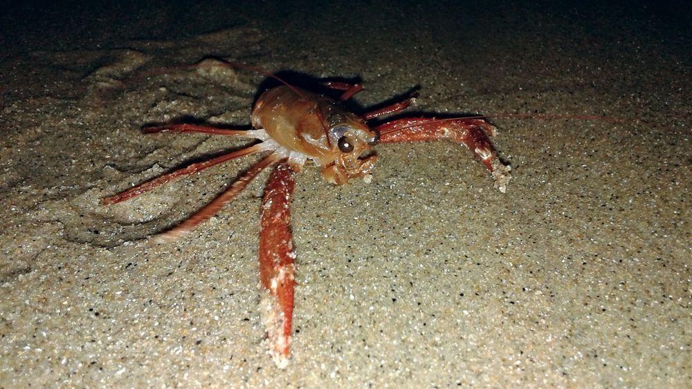 Crab Sea Sea Life Combing The Beach Beachlife Beach Nature