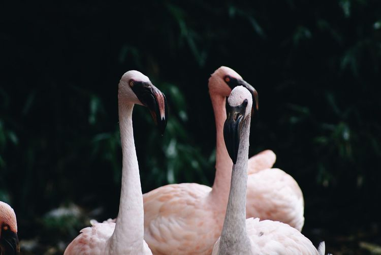 Flamingos Against Plants