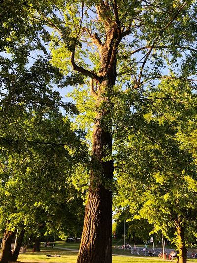 Low angle view of trees in park