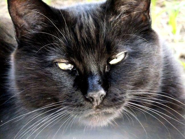 Lifestyle Fujifilm Pets Animals Catsofinstagram Cats Of EyeEm Cute Cats Gatto BLackCat Cat