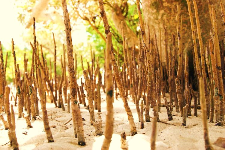 #macro #mangrove #palawan #Phillippines Beauty In Nature Close-up Day Nature No People Outdoors Sunlight Tranquility Tree
