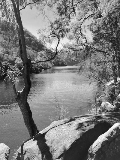 Tree Water Nature Beauty In Nature River Tranquility No People Branch Scenics Day Tranquil Scene Outdoors Landscape Sky Australian Bushland Monochrome Black & White Berowra Creek