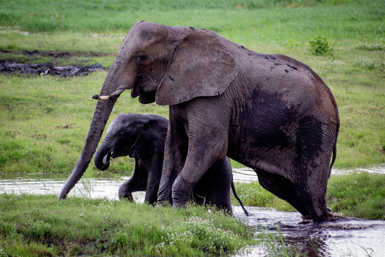 Close-up of elephants in water