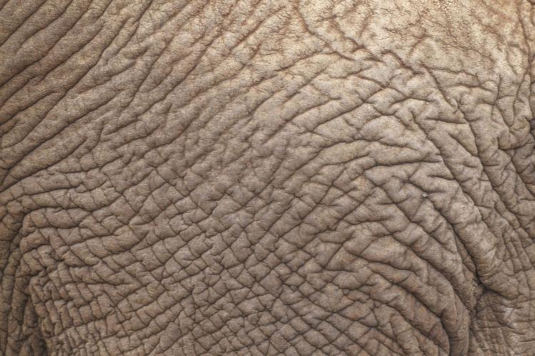 Full Frame Shot Of Elephant Skin