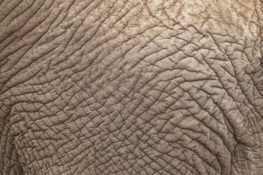 Elephant skin pattern Africa African Animals African Elephant African Elephants African Safari Animal Body Part Animal Skin Animal Themes Animal Wildlife Animals In The Wild Backgrounds Close-up Day Elephant Full Frame Mammal Nature No People One Animal Outdoors Pattern Safari Animals South Africa Textured  Wrinkled
