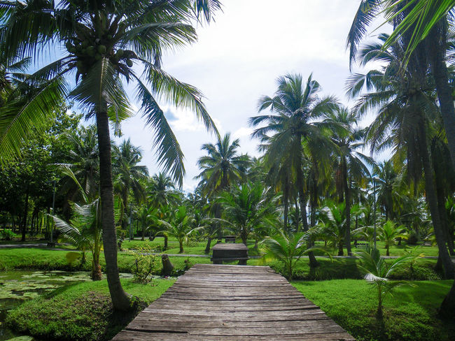 Beauty In Nature Coconut Palm Tree Day Diminishing Perspective Direction Footpath Grass Green Color Growth Land Nature No People Outdoors Palm Tree Plant Scenics - Nature Sky Thai Garden The Way Forward Tranquil Scene Tranquility Tree Treelined Tropical Climate Tropical Tree