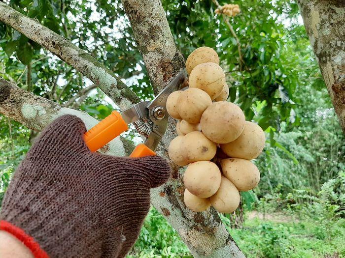 Fruit Glove