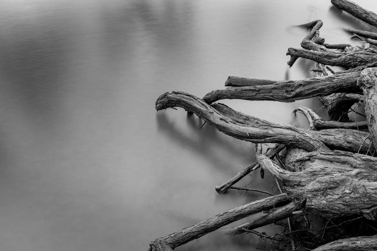 Relaxing Pictures Nature Reflection Rhein Tranquility Tree Beauty In Nature Black And White Blackandwhite Day Long Exposure Nature No People No People, Outdoors River Roots Tranquil Scene Water