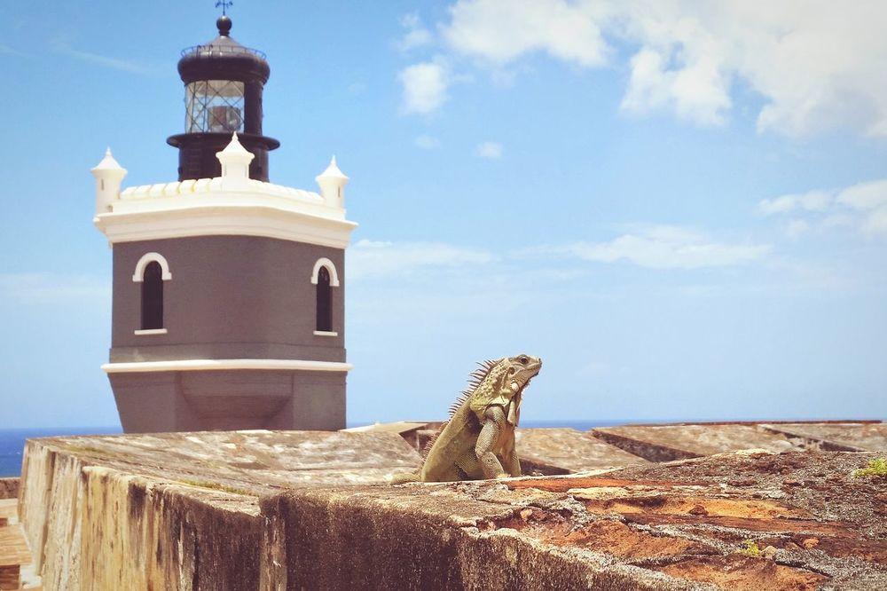 Puertorico Lizard Lighthouse