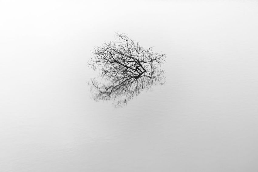 Dead or live nature?! Fine Art Photography Bare Tree Beauty In Nature Black And White Branch Cold Temperature Day Lone Nature No People Outdoors Tree Winter