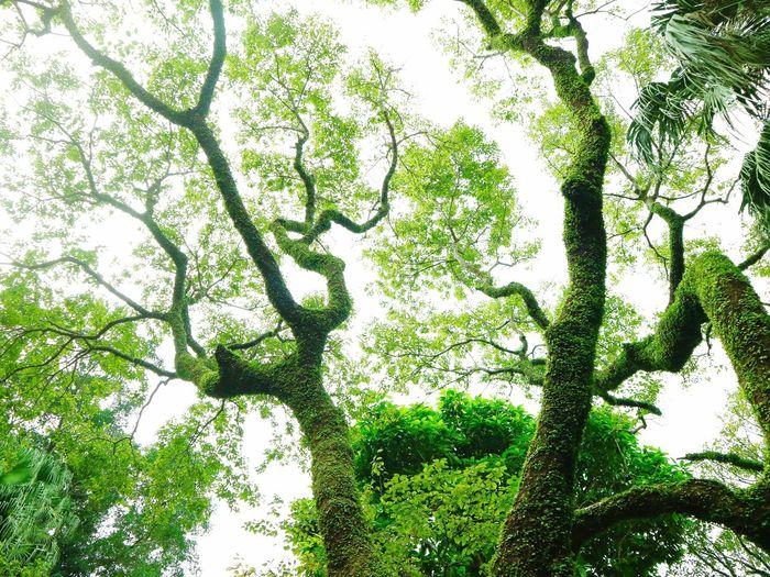 Be. Ready. Tree
