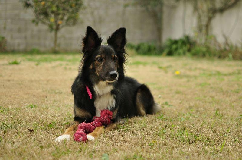 Lali; Mascota Mascot Mascotas 🐶 Mi Mascota Perro Perrito Dog❤ Dogs DogLove Dogsofinstagram