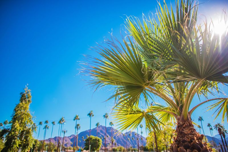 Low angle view of palm trees against clear blue sky during sunny day