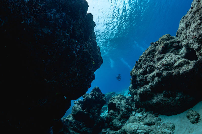Rota Underwater UnderSea Sea Water Rock Sea Life Solid Rock - Object Animals In The Wild Nature Animal Wildlife Coral Marine Swimming Rock Formation Animal No People Beauty In Nature Invertebrate Outdoors Underwater Diving