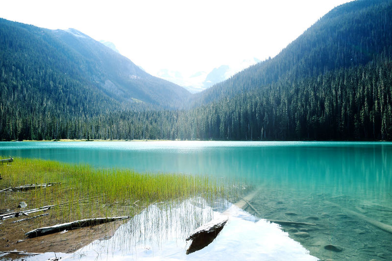 Camping Water Beauty In Nature Mountain Lake Scenics - Nature Tree Nature Day Sky Waterfront Landscape Outdoors No People Positive Wish Hope Coal Heaven Earth Skyblue Clear Water Summer Summer Views Vacations Canada Canada Photos Joffre Lakes Joffre Lakes, B.C.