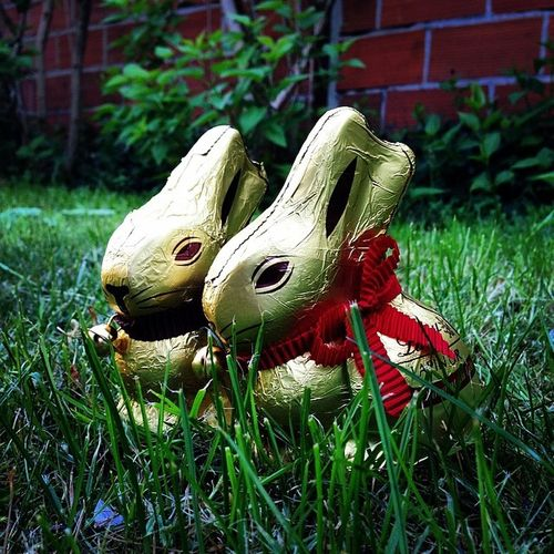 Happy easter holidays !! Bunny  Chocolate Easter Holiday easterbunny lindt