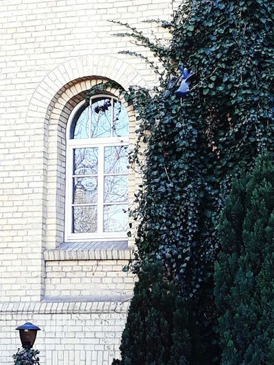 Bilding Music No People Tree Window Architecture Built Structure Building Exterior Historic Rose Window