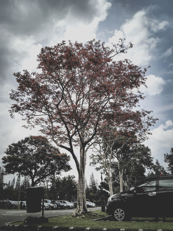 That's not fall anymore Parking Parking Area Parking Lot Car Outdoor Photography Outdoor Pictures Shotonphone Cianjur Exploretocreate INDONESIA Outdoors Cloud Clouds And Sky Random Randomshot Park Garden Red Leaves Beautiful Beautiful Destinations Visualsoflife Wilderness Tree Park - Man Made Space Sky Grass Cloud - Sky Landscape Single Tree Vehicle