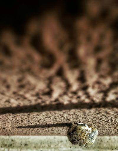 The lonely climber... Climber Wall Climber Climbers Snails Snail🐌 Snail Lonelyness Lonely Composition Visual Perception EyeEm Best Shots Eyeem2015 EyeEmBestPics EyeEm Gallery EyeEm Nature Lover Snailshell