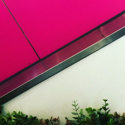 Close-up of pink wall by building