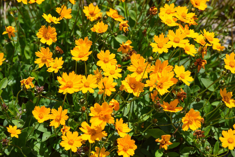 Abundance Of Flowers Beauty In Nature Flowers Nature Yellow Flowers