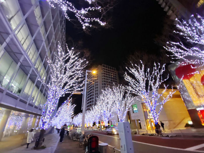 Illuminated christmas tree at night