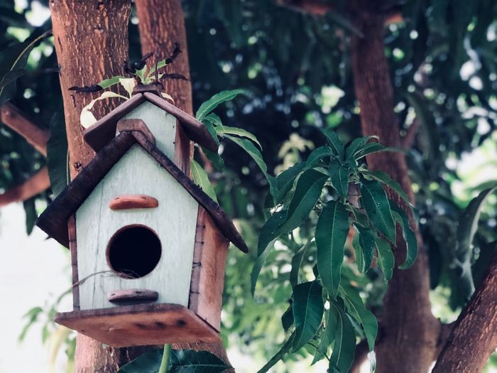 Handing Hand Wooden Wood Home House Animal Animals Birds Bird Tree Trunk Day Hole Plant Birdhouse Focus On Foreground Tree Nature Trunk Tree Trunk Outdoors Plant Part Low Angle View Close-up Growth Wood - Material Green Color Tranquility