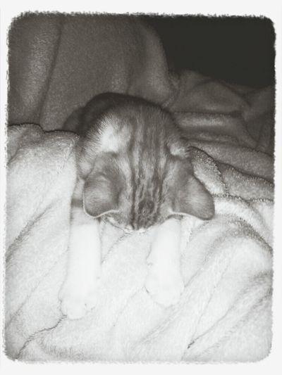 Schlafender kater First Eyeem Photo