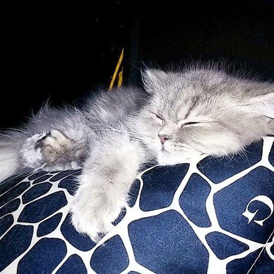 냥 냥스타그램 고양이 야옹 로지