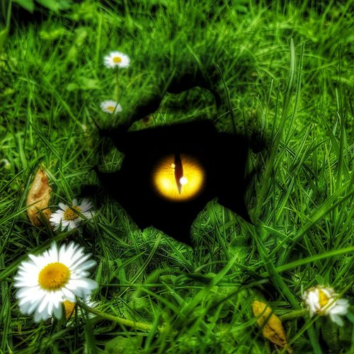 Creative Edit Grass Flowers Hole Eye Looking Up Green Color Freshness
