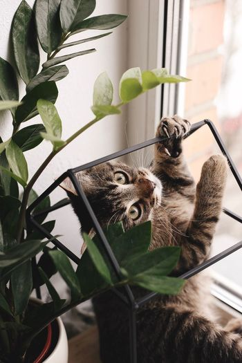 Cat Standing By Potted Plant On Table At Home
