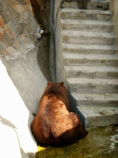 Обиделся :))) Nature природароссии Russia россия Russian Nature Moscow, Москва Zoo московскийзоопарк медведь Animal Bear