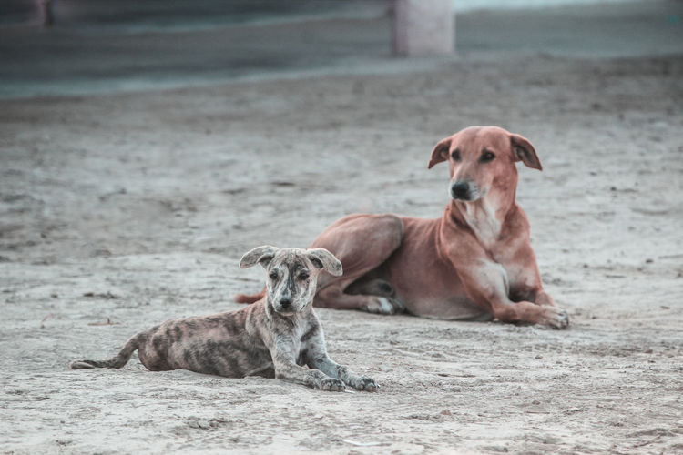Dogs sitting on a land