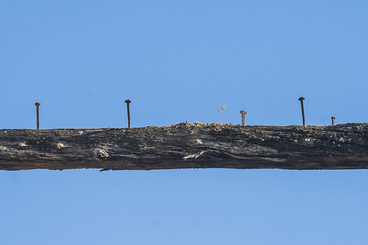 Low angle view of bird perching on wood against clear blue sky