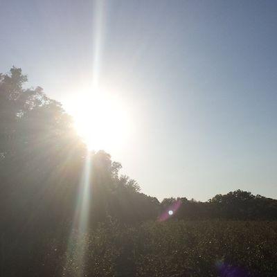 Florida forever Floridalivin Blueberries Blueberryfield Gorgeous sunset love