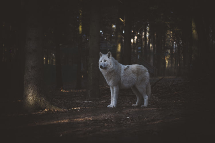 safe the animals Beautiful Nature Beautifulcreatures Nature Nature No People One Animal Outdoors Photography Safetheplanet Wildlife Photography Wolf