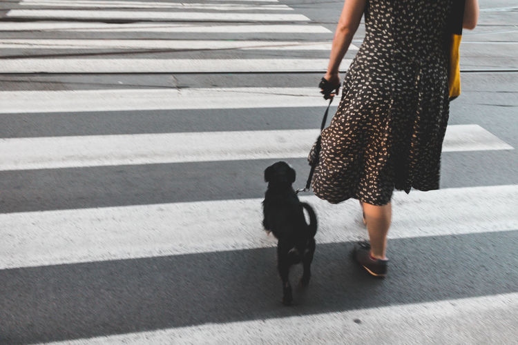 Low Section Of Woman Walking With Dog On Zebra Crossing