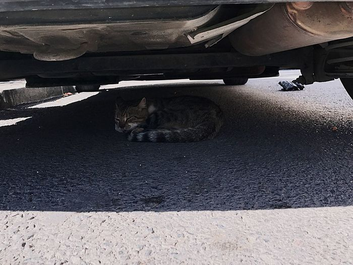 Cats 🐱 Street Cat Cat Is Sleeping Under The Car Street Cats Sleep Everywhere Homeless Cats Animal Themes Lying Down Outdoors IPhone 7 Pet Photography