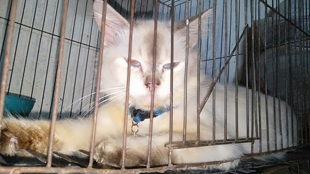 PORTRAIT OF AN ANIMAL IN CAGE