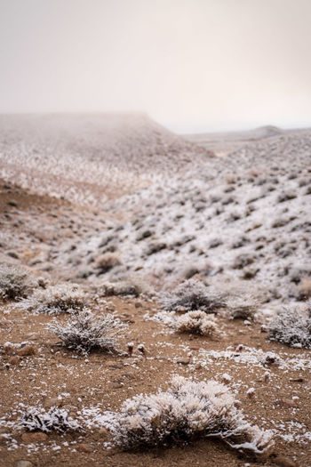 winter desert snowfall Eastern Sierra Nevada mountain valley California No People Nature Land Winter Environment Sky Scenics - Nature Snow Cold Temperature Landscape Desert Day Horizon Tranquility Sand Outdoors Copy Space Dry Arid Climate Climate Desert Landscape Desert Snow