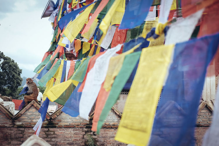 Monkey sitting by colorful prayer flags at temple